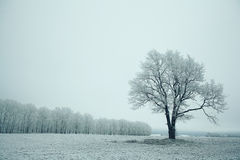 Magical winter snow Stock Image