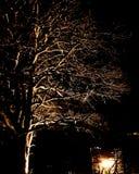 Magicaltree nightphotography Arkivbild