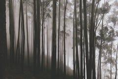 Magican Forest Trees mit erstaunlichem weißem Nebel in regnerischem Autumn Day Lizenzfreie Stockfotos