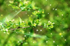 Magicgreen branch Royalty Free Stock Images