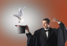 Magician. Portrait of a magician letting a dove fly out from his magic hat Stock Photography