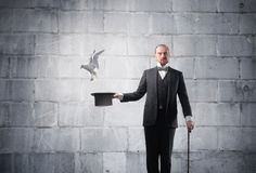 Magician. With bird flying away from his cylinder hat Royalty Free Stock Photos