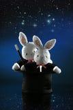 Magician bunnies Stock Images