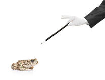 Magician holding a magic wand and a frog Stock Image