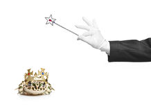 Magician holding a magic wand and a frog. Isolated on white background royalty free stock images