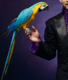 Magician man in stage costume Stock Images
