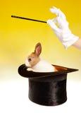 Magician and rabbit Royalty Free Stock Photos