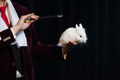 Magicien avec le lapin, homme de jongleur, personne drôle, magie noire, illusion sur un fond noir images libres de droits