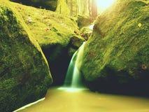 Magiczna lasowa strumień zatoczka w jesieni z kamienia mech paprociami i spadać liśćmi Zdjęcie Royalty Free