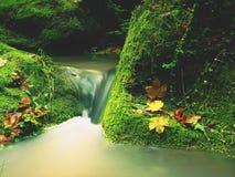 Magiczna lasowa strumień zatoczka w jesieni z kamienia mech paprociami i spadać liśćmi Zdjęcia Stock