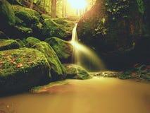 Magiczna lasowa strumień zatoczka w jesieni z kamienia mech paprociami i spadać liśćmi Obraz Stock