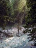magiczne światło Zdjęcie Royalty Free