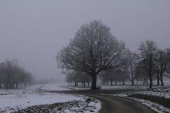 magiczne drzewo Fotografia Royalty Free