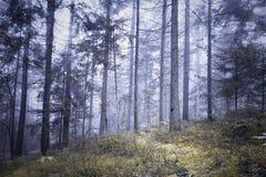 Magicznej bajki lasowego drzewa mgłowy krajobraz Obrazy Royalty Free