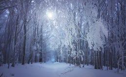 Magicznej zimy lasowa droga Zdjęcia Royalty Free