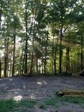 Magiczni drewna zdjęcie royalty free