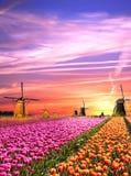 Magiczni krajobrazy z wiatraczkami i tulipanami przy wschodem słońca w N fotografia royalty free