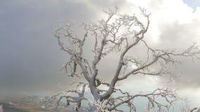 Magiczny śnieg zakrywający zimy drzewo zbiory