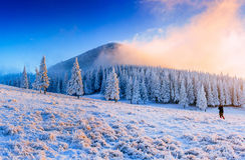Magiczny śnieg zakrywający zimy drzewo Karpacki, Ukraina, Europa Zdjęcia Stock