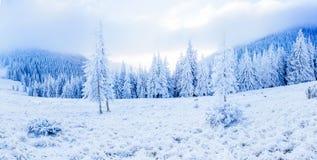 Magiczny śnieg zakrywający zimy drzewo Piękno świat carpathians Ukraina europejczycy obraz stock