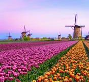 Magiczny czarodziejski zafascynowanie krajobraz z wiatraczka środka tulipanem Fotografia Royalty Free