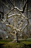 magiczny drzewo Zdjęcia Royalty Free