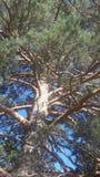 Magiczny drzewo Obrazy Royalty Free