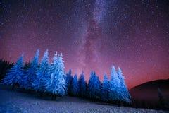 Magiczny drzewo w gwiaździstej zimy nocy Fotografia Stock