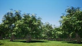Magiczny halny las z drzewami r na wzgórzach Ciepły sunbeams iluminować zdjęcie wideo