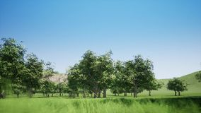 Magiczny halny las z drzewami r na wzgórzach Ciepły sunbeams iluminować zbiory
