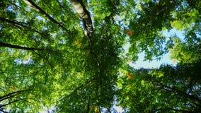 Magiczny halny las z drzewami r na wzgórzach Gimbal strzał zdjęcie wideo