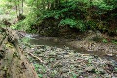 Magiczny halny strumień w Karpackim lesie obraz royalty free