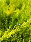 Magiczny insekt obrazy royalty free