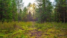 Magiczny jesień las z komarnicy bedłką, upływ zbiory