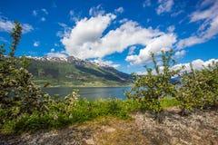 Magiczny krajobraz Norwegia w Maju Fotografia Royalty Free