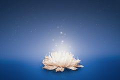 Magiczny kwiat unosi się na wodzie Zdjęcie Royalty Free
