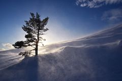 Magiczny Lapland Zdjęcie Royalty Free