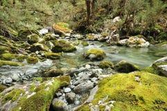 Magiczny las przy Routeburn śladem, Nowa Zelandia Obraz Royalty Free