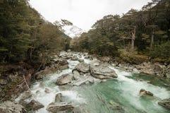 Magiczny las przy Routeburn śladem, Nowa Zelandia Zdjęcia Royalty Free