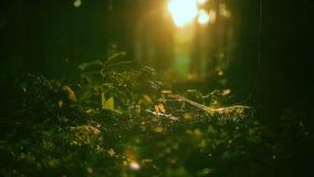 Magiczny las, słońce bawić się w trawie, insekty mrowi się w trawie zbiory