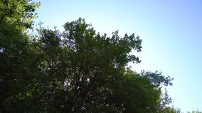 Magiczny las z drzewami zdjęcie wideo