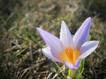 magiczny pollen zdjęcie royalty free