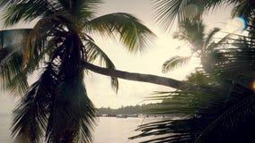 Magiczny ranek na tropikalnej egzot plaży Słońce promienie między drzewko palmowe liściem i ptasim gwizd zdjęcie wideo