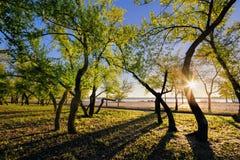 Magiczny ranek z powstającym słońcem tworzy sztukę światło w miasto parku Zdjęcie Stock