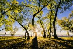 Magiczny ranek z powstającym słońcem tworzy sztukę światło w miasto parku Ja Fotografia Stock