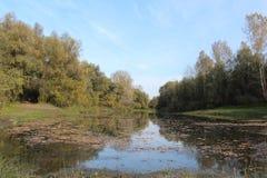 Magiczny rozrzucanie liście na drodze od wody Zdjęcie Royalty Free
