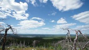 Magiczny szamanu las z nieżywymi drzewami zdjęcie wideo