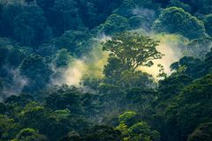 Magiczny wschód słońca w dżungli zdjęcie stock