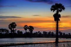 Magiczny wschód słońca z drzewem obraz stock