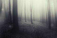 Magiczny zaczarowany las z mgłą i dziwacznym światłem zdjęcie royalty free